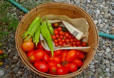 03-tomatoes