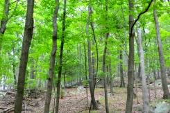 Woods 02